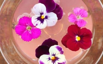 hangar_1_pink_cocktail